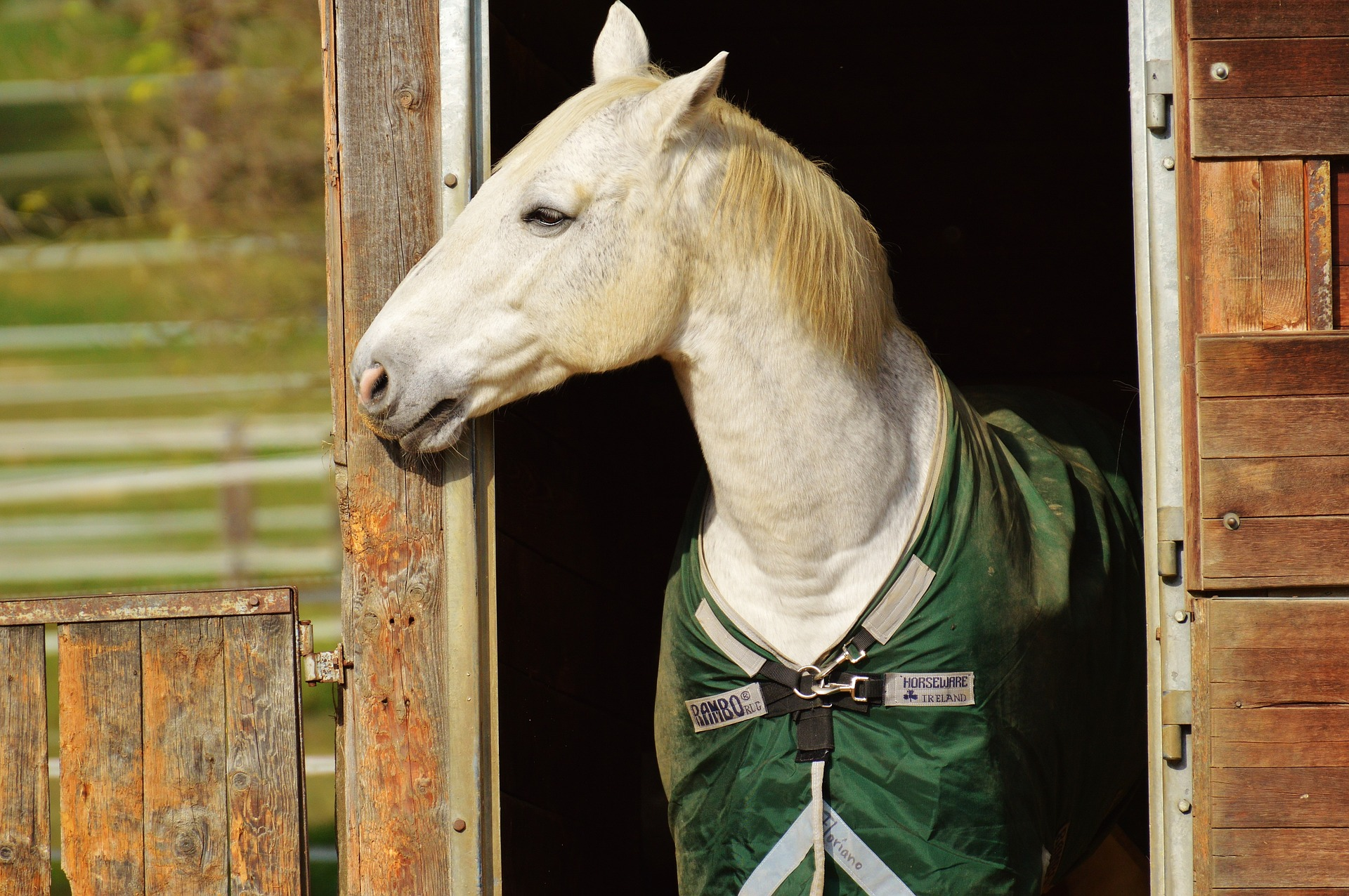 Pferdedeckenreinigung Detmold